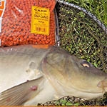 Horgászat a Benzár pelletekkel