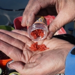 Jelly Baits variációk – Élő és mesterséges csalik imitációja az úszós horgászatban